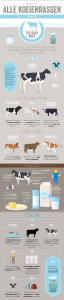 koeienrassen infographic