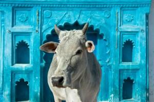 India kaasland