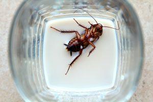kakkerlakkenmelk gezond
