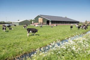 grondgebondenheid melkveehouderij