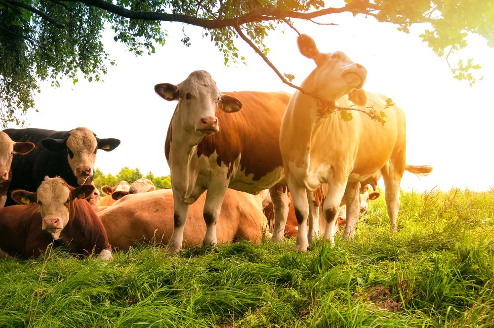Productie van biologische melk stijgt