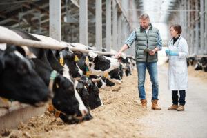 Deze wetten en regels zorgen voor gezonde koeien